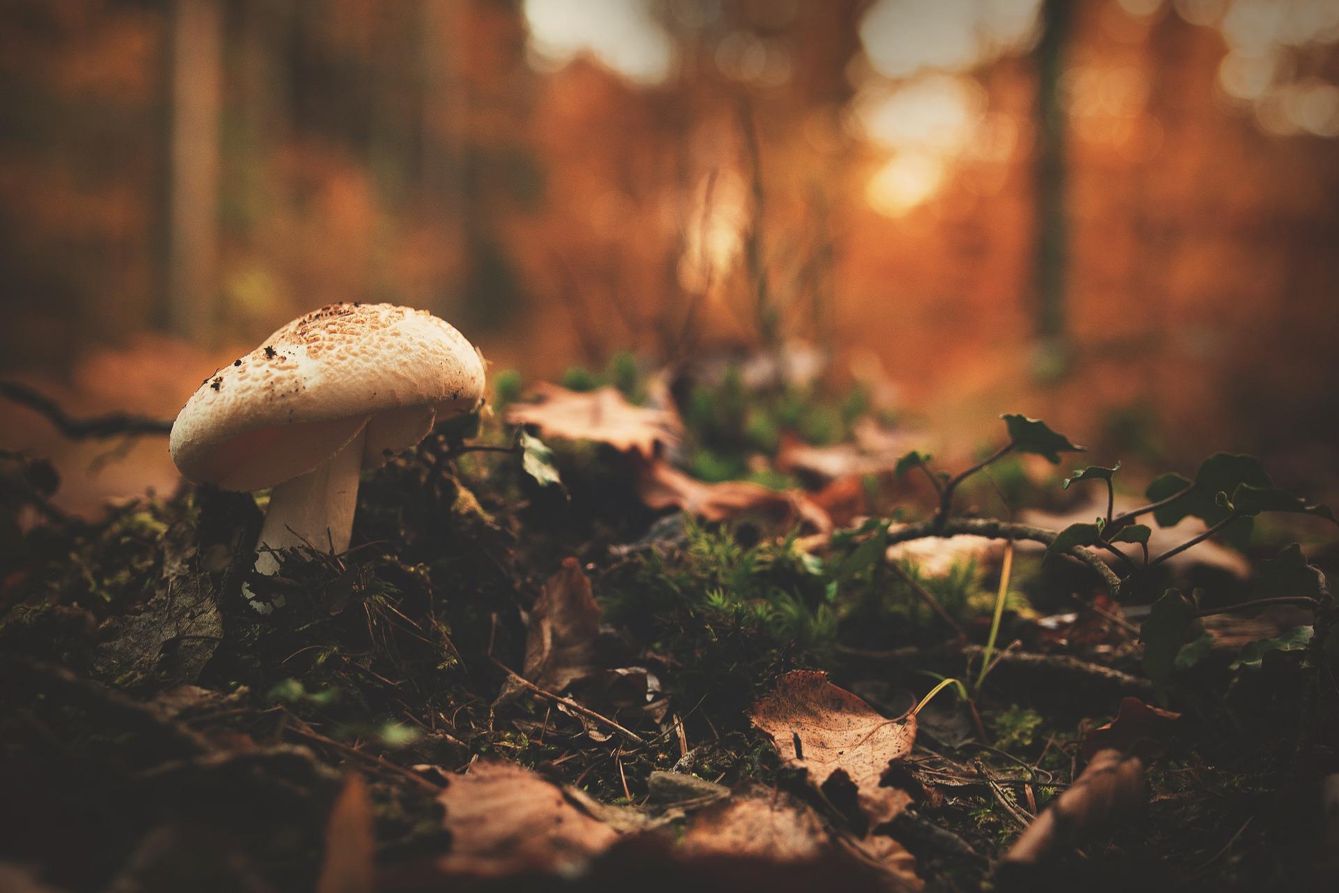 autumn-1867329_1920
