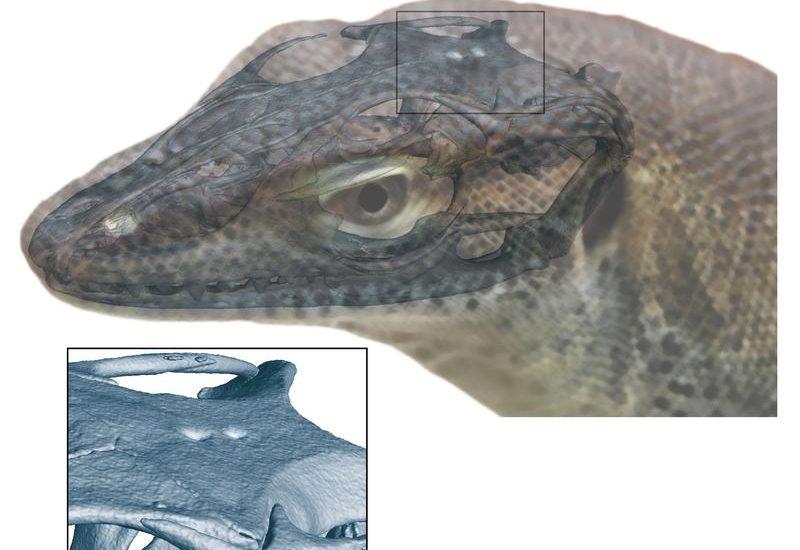 fisch reptil 2018