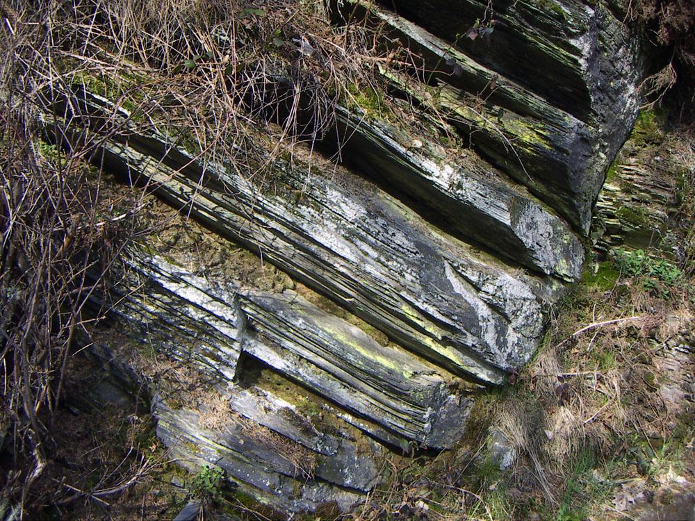 Anstehender unterdevonischer Tonschiefer in der nördlichen Eifel. Die Verwitterung macht die dünnschichtige Spaltbarkeit deutlich sichtbar. Foto: © Caronna  CC BY-SA 3.0